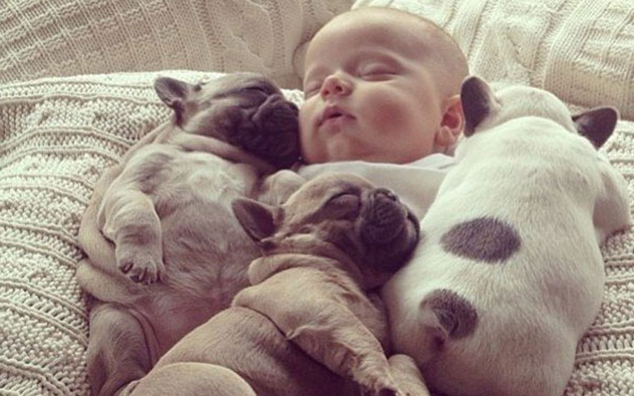 Puppies Babies To Cure The Monday Blues The Salty Ju