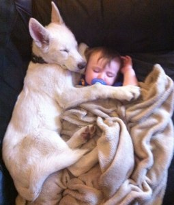 baby-and-dog2_1393599528524_5826_ver1.0