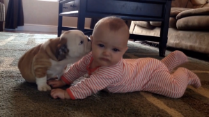 bulldog-puppy-baby-kisses