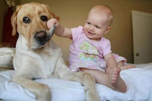 Dog-not-sure-about-this-baby-thing