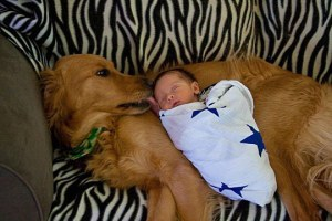 funny-cute-dog-kissing-baby