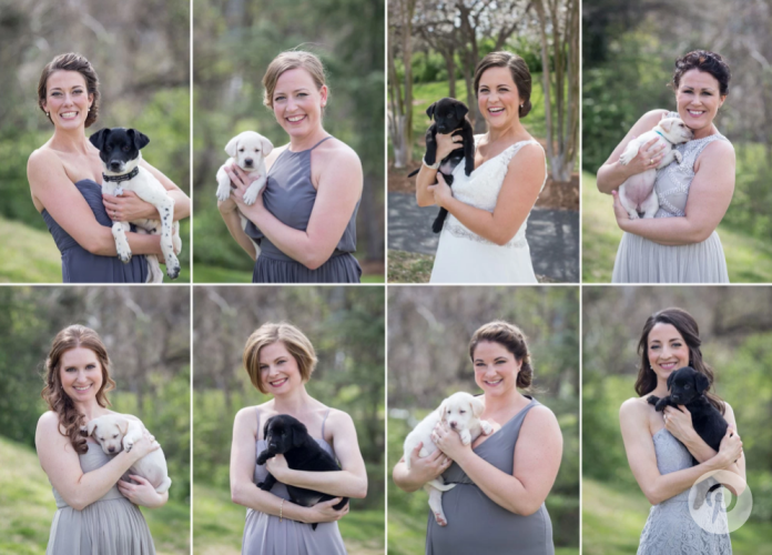 bridalpuppies