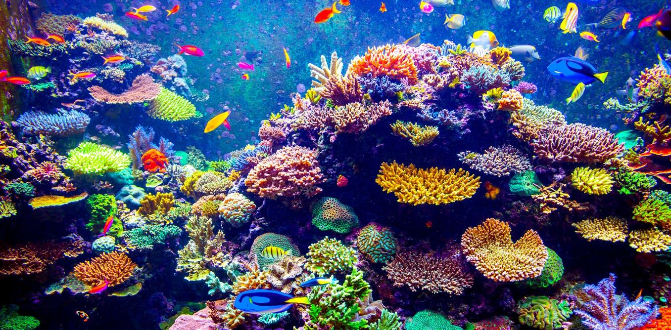 pla-coral-reef-bioplastics